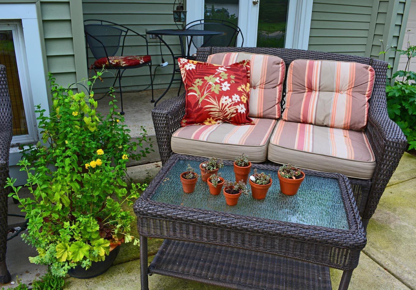 Grow Herb Garden on Patio