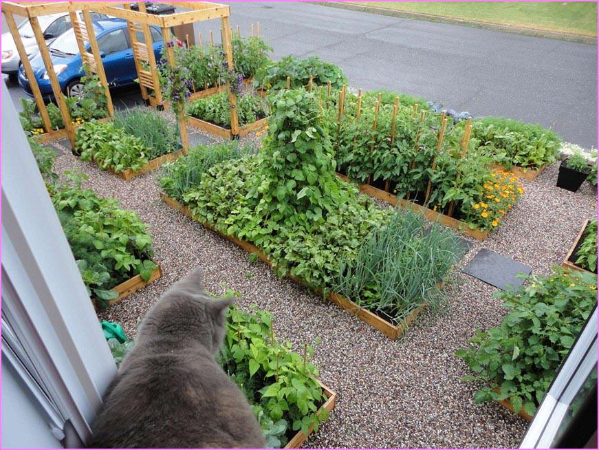 Grow Herb Garden Outdoors