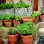 Herb Garden Kit Outdoor Large Garden Design Ideas