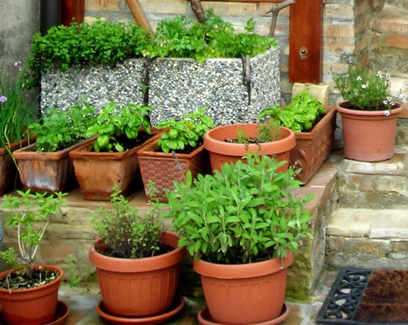 Grow Outdoor Herb Garden