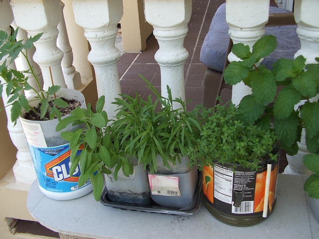 Growing a Patio Herb Garden