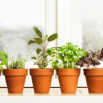 Growing a Small Herb Garden