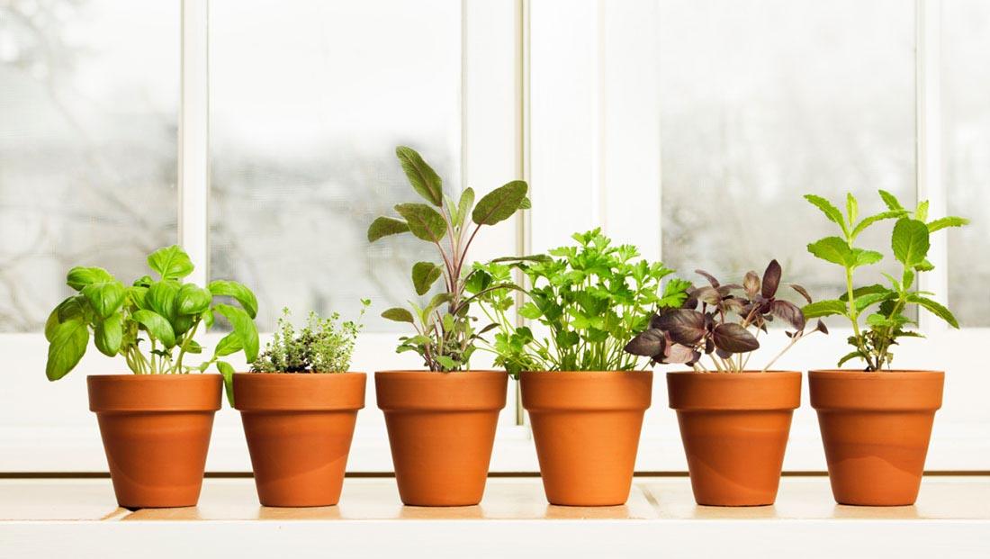 Growing a Small Herb Garden