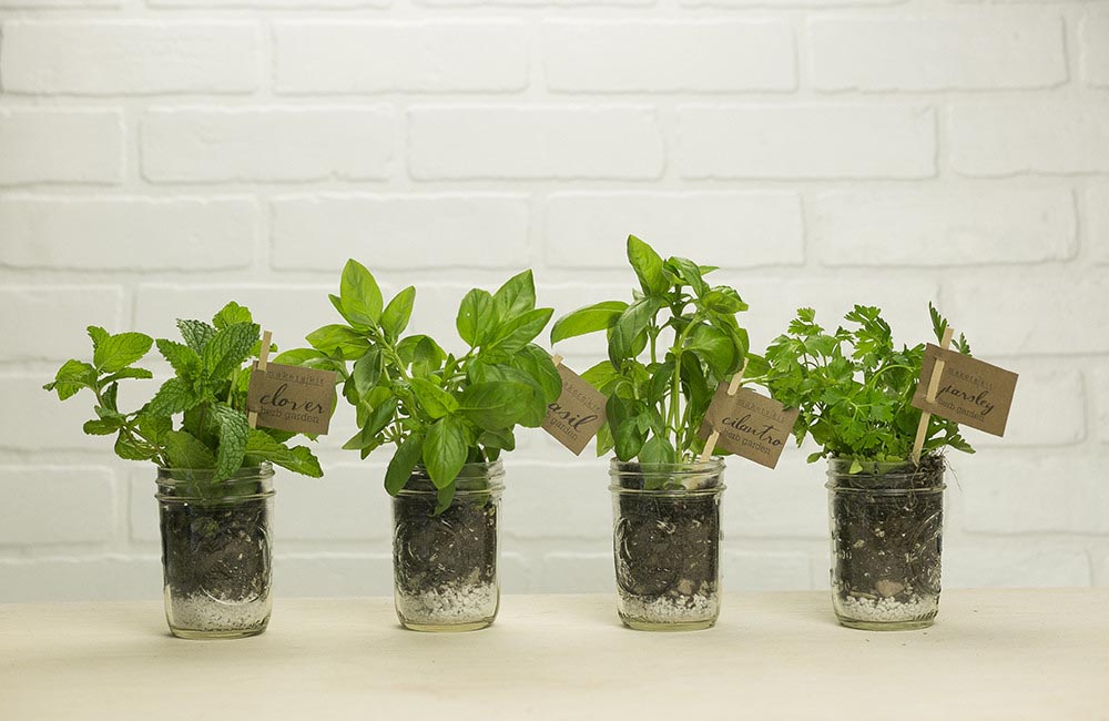 Growing an Indoor Herb Garden in Winter