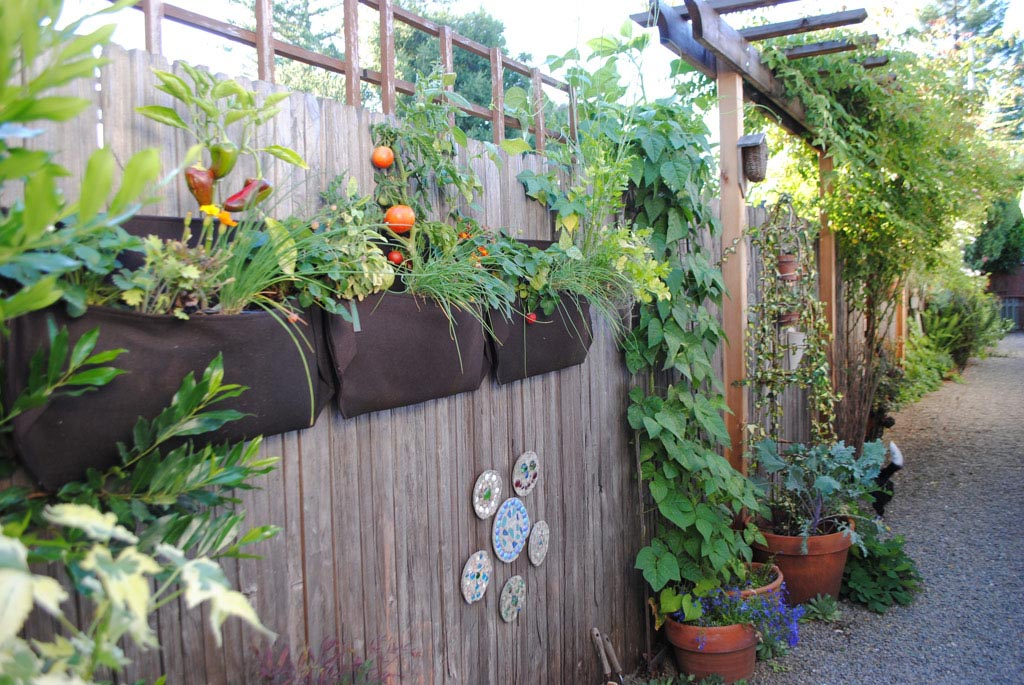 Hanging Vegetable Garden on Fence