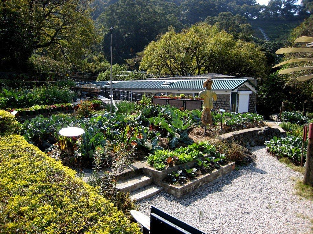 Herb Companion Garden Planner