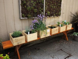 Herb Garden Box Kit