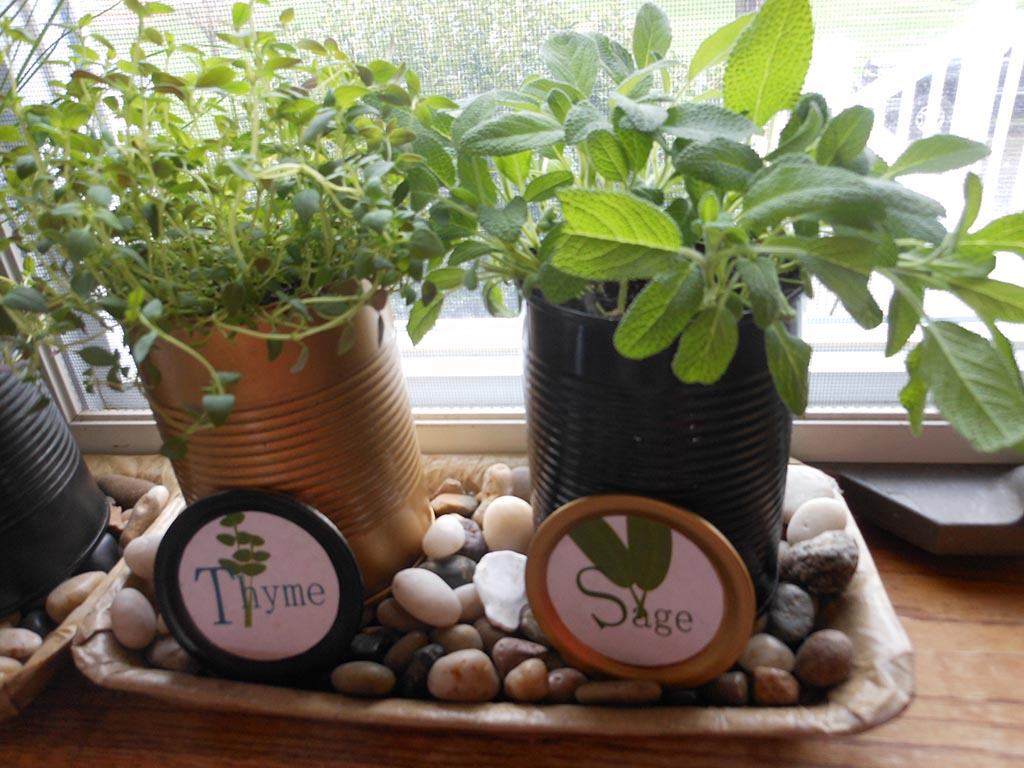 Herb Garden for Kitchen Windowsill