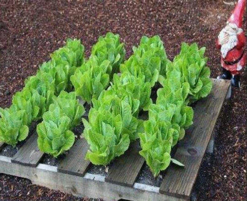 Herb Garden Ideas Pallet