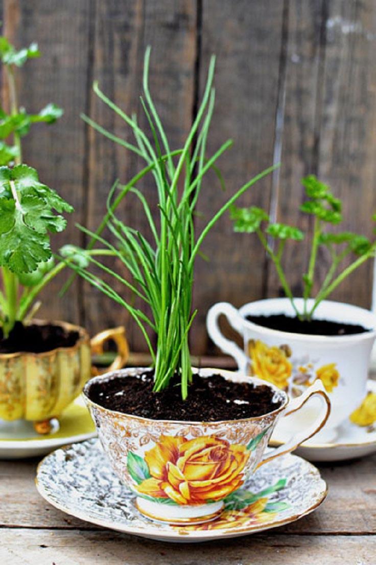 Herb Garden Ideas Pots