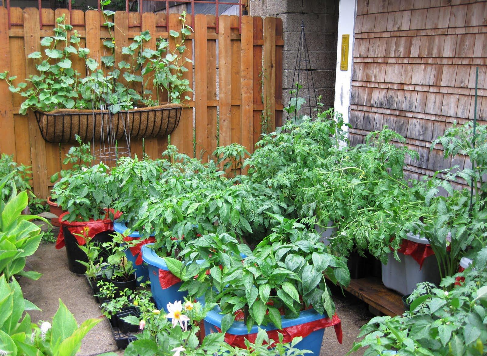 Herb Garden in a Pot