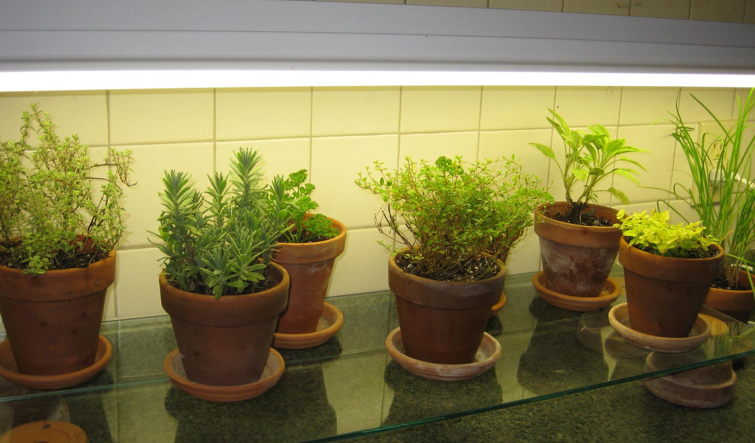 Herb Garden in Kitchen
