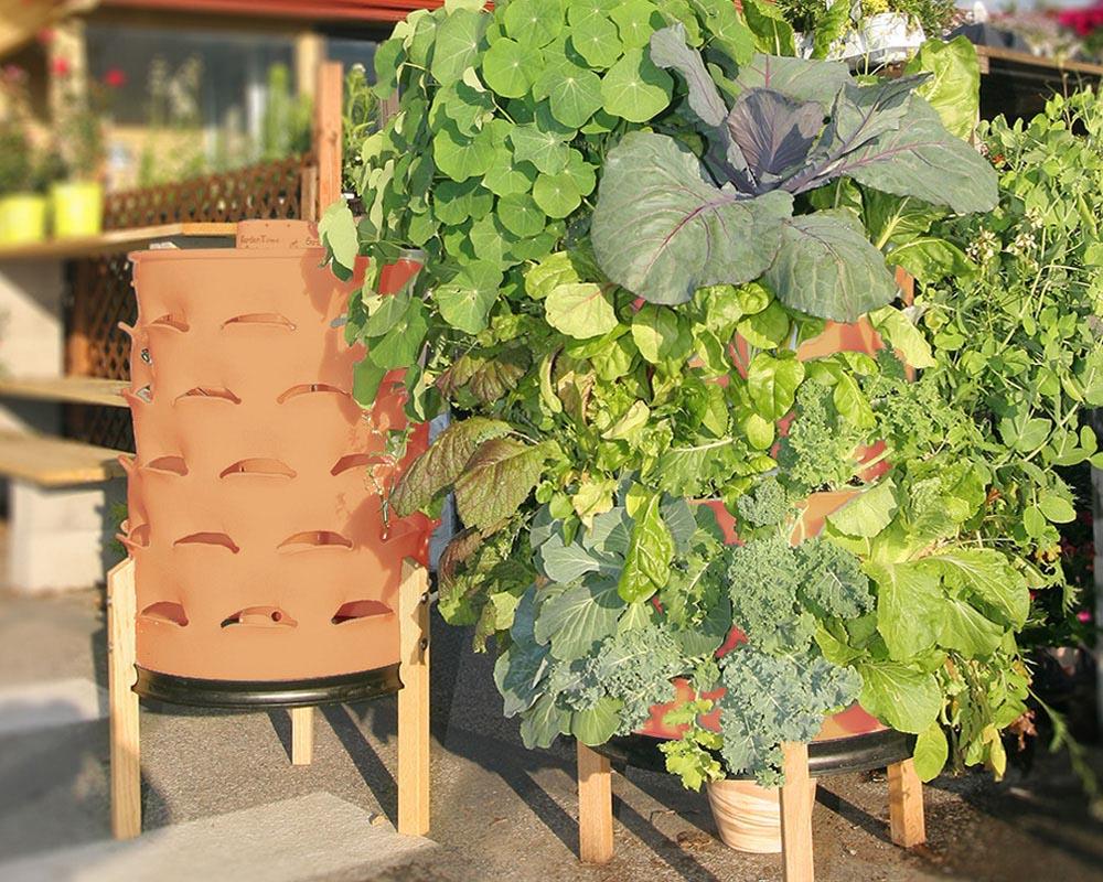 Herb Garden in Planters