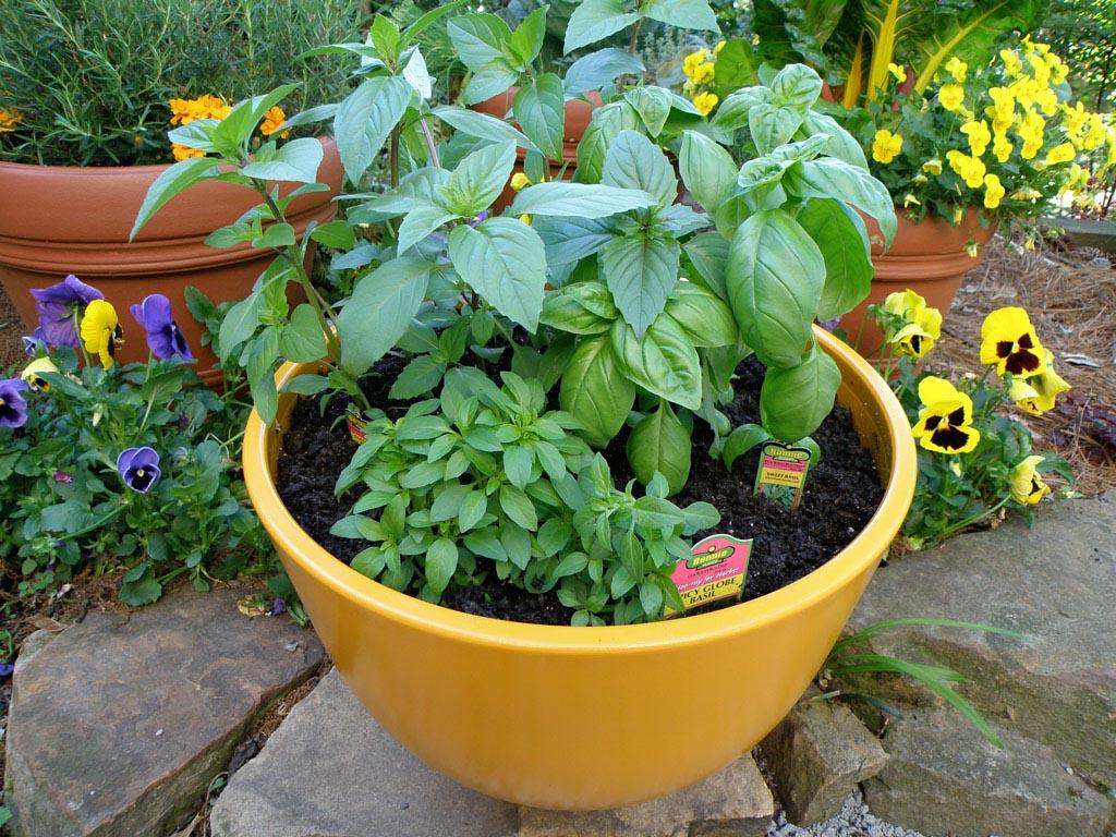 Herb Garden Outdoor Temperature