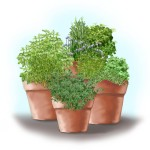 Herb Garden Planter Container