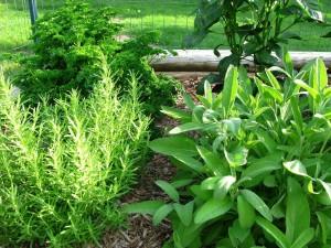 Herb Garden Planters Box