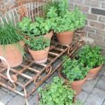 Herb Garden Pots Outdoors