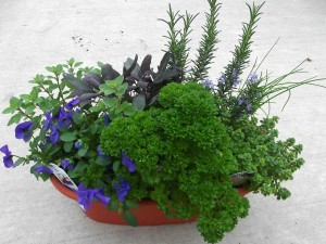 Herb Garden Pots Outdoors
