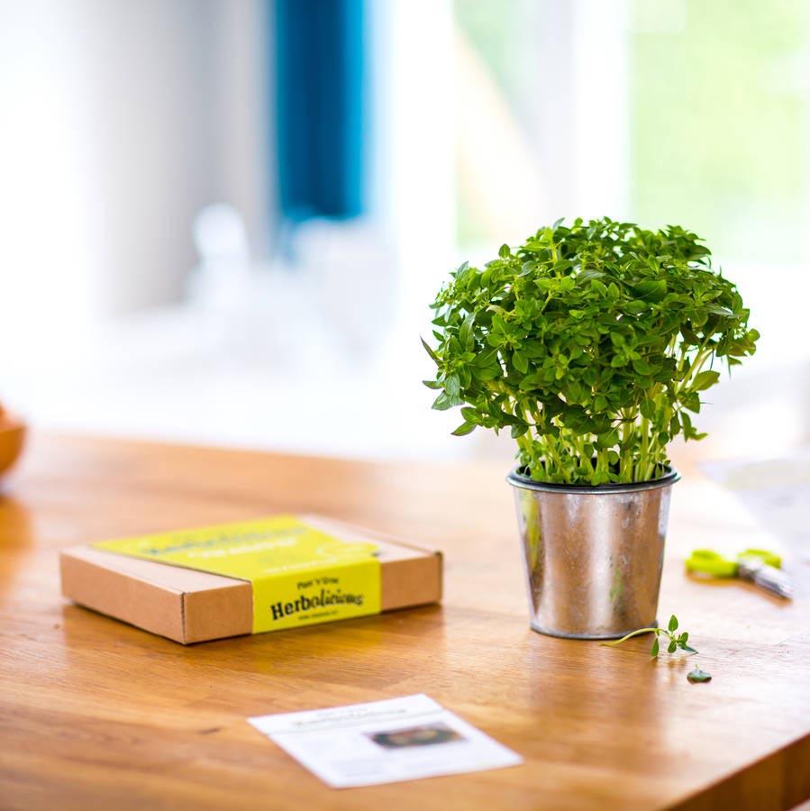 Herb Garden Starter Kit Outdoor