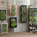 Herb Garden Wall Planter