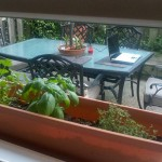 Herb Garden Window Sill