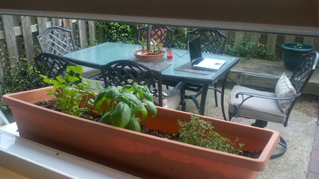 Herb Garden Window Sill