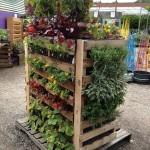 Herb Garden with Pallets