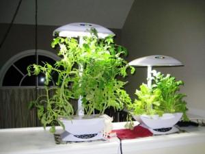 Hydroponic Herb Garden Indoor
