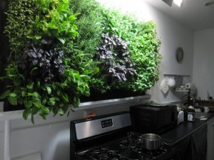 Hydroponic Kitchen Herb Garden