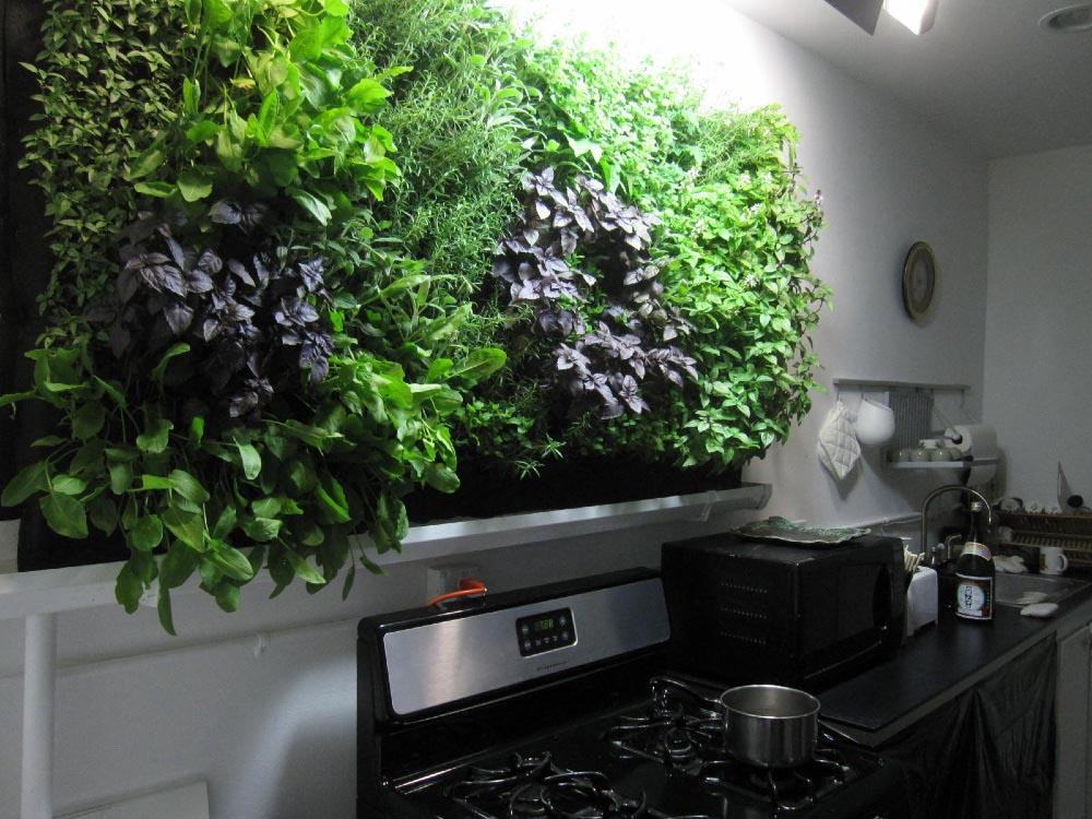 Hydroponic Kitchen Herb Garden