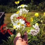 Indian Paintbrush Silk Flowers