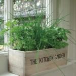 Indoor Herb Garden Bugs