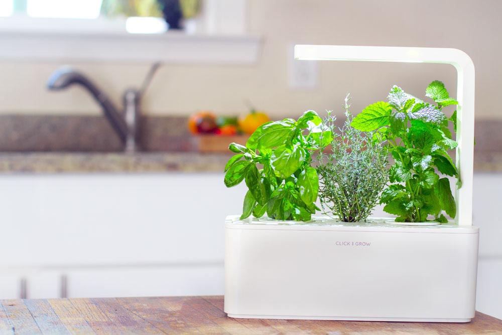 Indoor Herb Garden Light Requirements