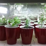 Indoor Herb Garden Lighting
