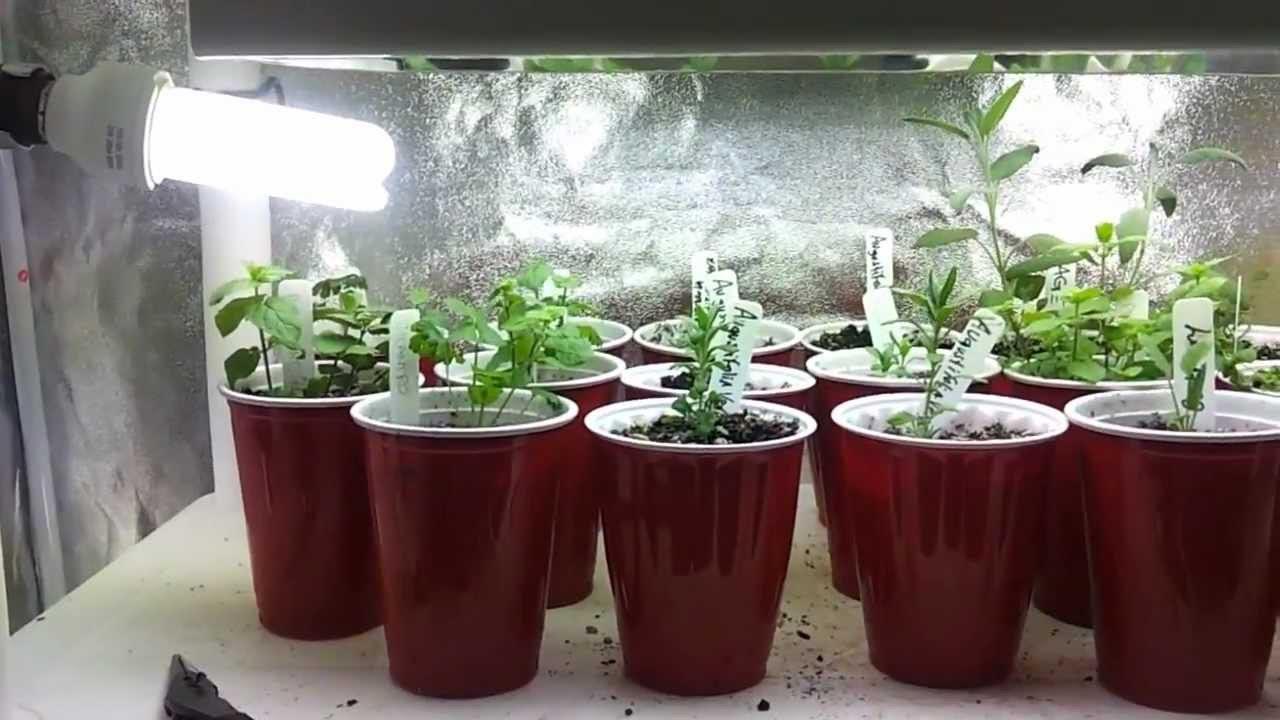 Indoor Herb Garden Lighting