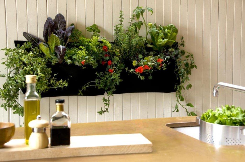 Indoor Kitchen Herb Garden Kit