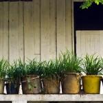 Indoor Outdoor Herb Garden