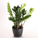 Indoor Plants Low Light Low Maintenance