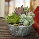 Indoor Succulent Container Garden