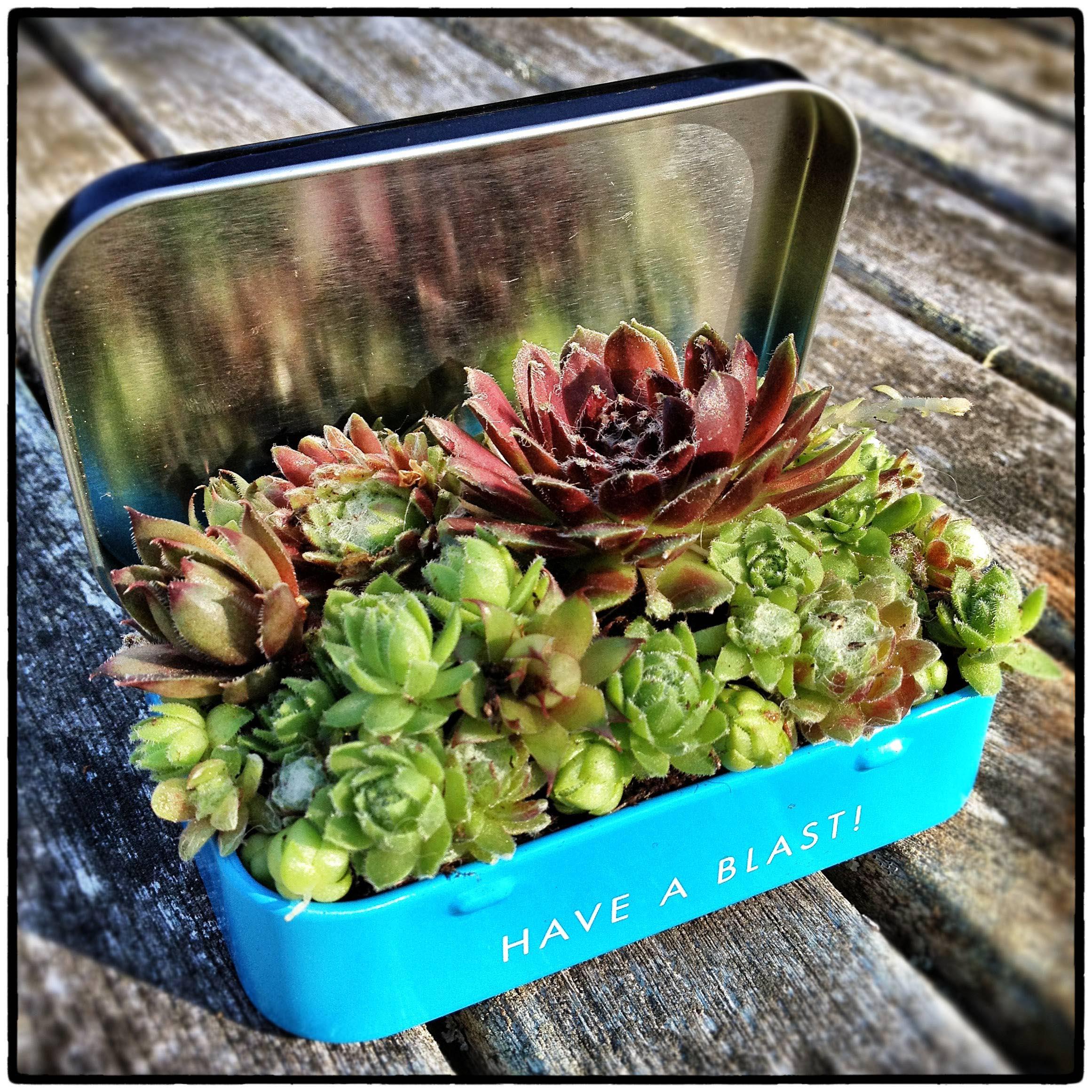 Indoor Succulent Container Gardening