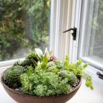 Indoor Succulent Container Gardens