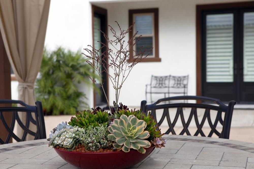 Indoor Succulent Dish Garden
