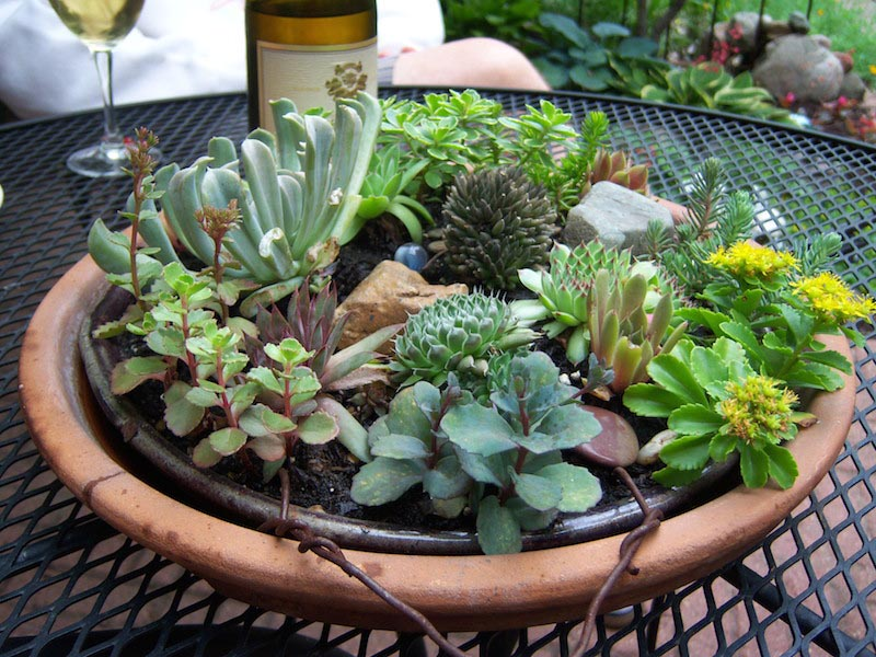 Indoor Succulent Garden Care