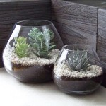 Indoor Succulent Garden Design