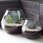Indoor Succulent Garden Design