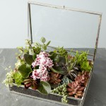 Indoor Succulent Garden DIY