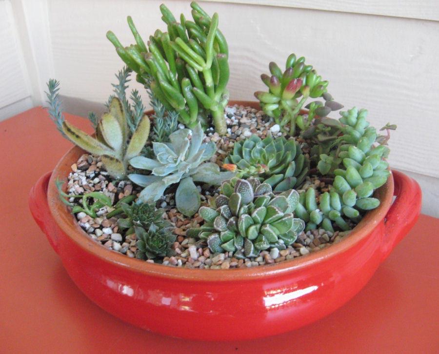 Indoor Succulent Garden Ideas Part - 27: Indoor Succulent Garden Ideas