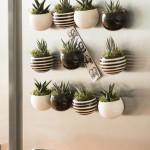 Indoor Succulent Garden Lighting