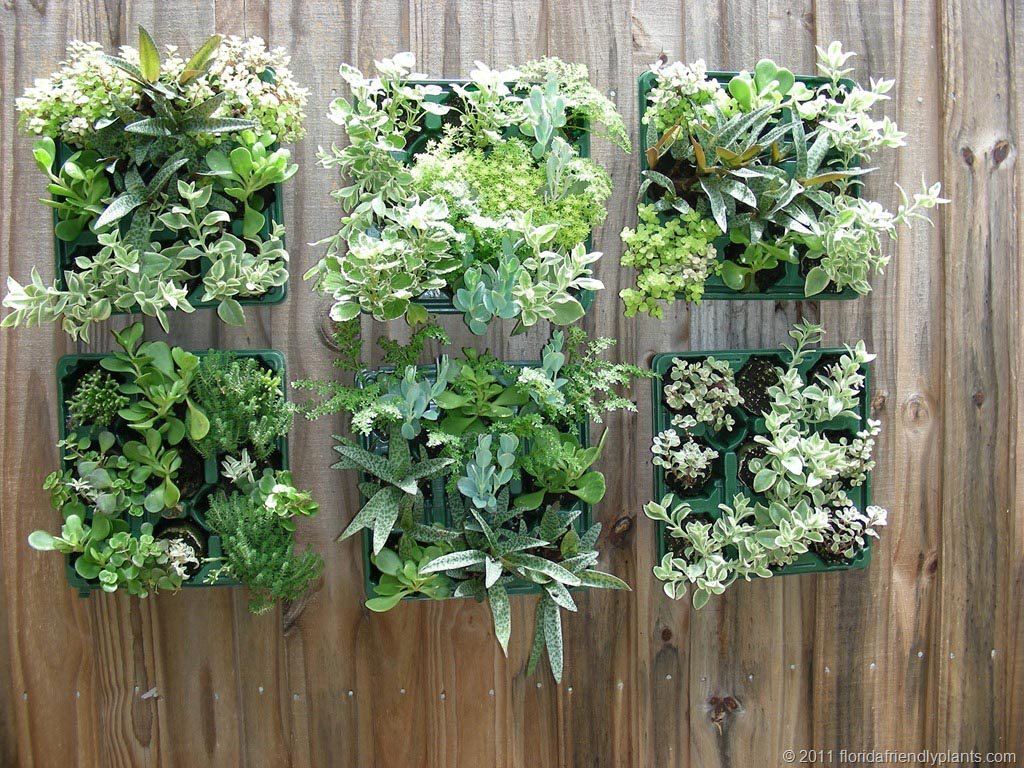 Indoor Vertical Succulent Garden