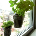 Indoor Window Herb Garden